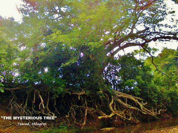 "THE MYSTERIOUS TREE By: Esra Marie Sia  ""Irug sani mag-hold on an mga Milagronians. Maski ginabaha san problema, todo kapit lang gihapon sa buhay"". Tawad, Milagros August 20, 2012 Winner of Best Photo Caption  Prize - P2,000.00"